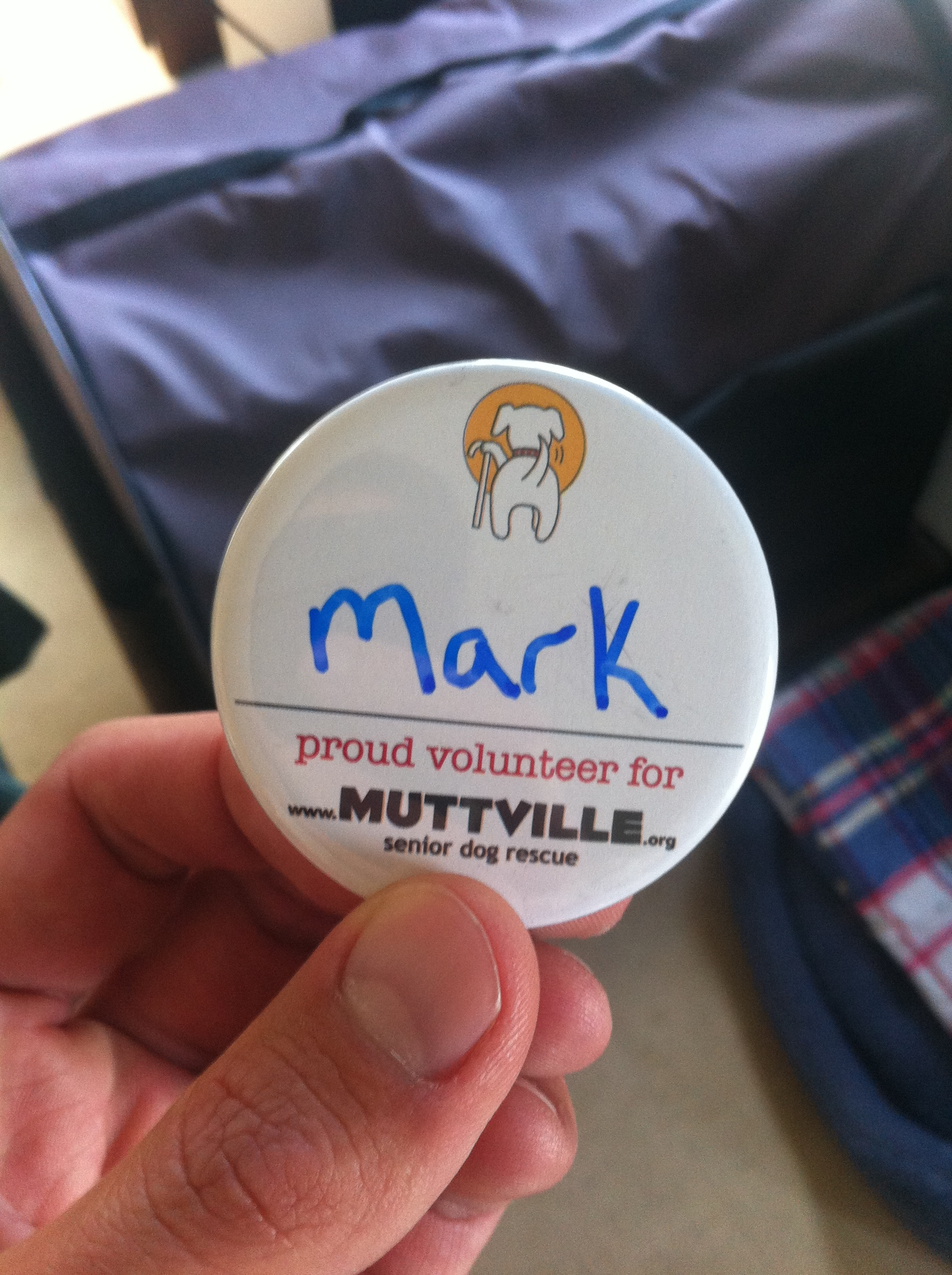 The Backpacker Intern volunteering at Muttville San Francisco