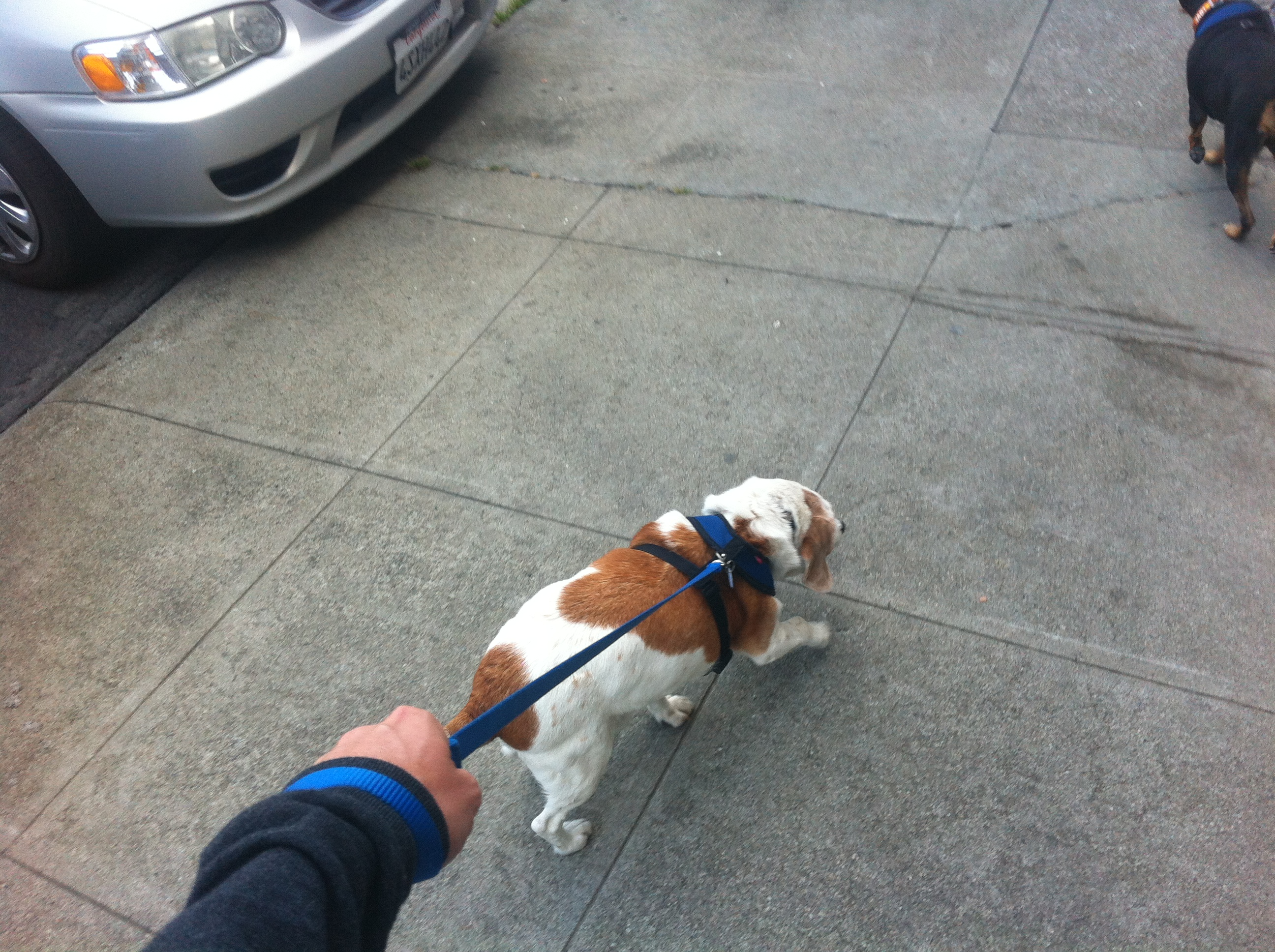 The Backpacker Intern walking the dog - Muttville San Francisco