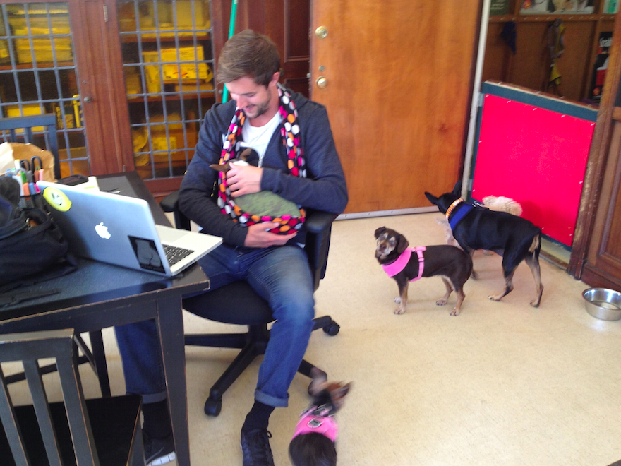 The Backpacker Intern at Muttvile Office - Muttville San Francisco